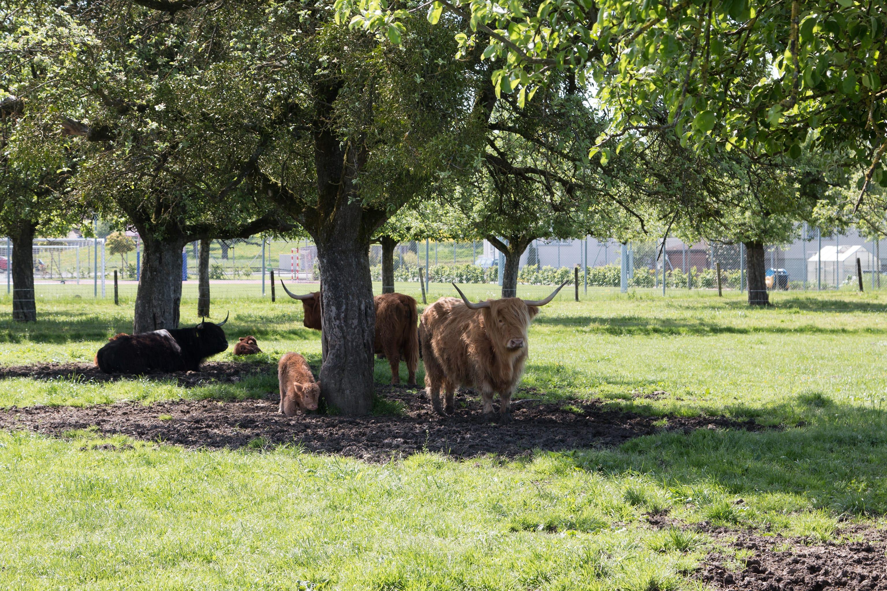 Die Tiere bei der Ruhepause:In der ganzjährigen Freilandhaltung auf der power-farm können soziale Beziehungen gepflegt und ausgelebt werden.