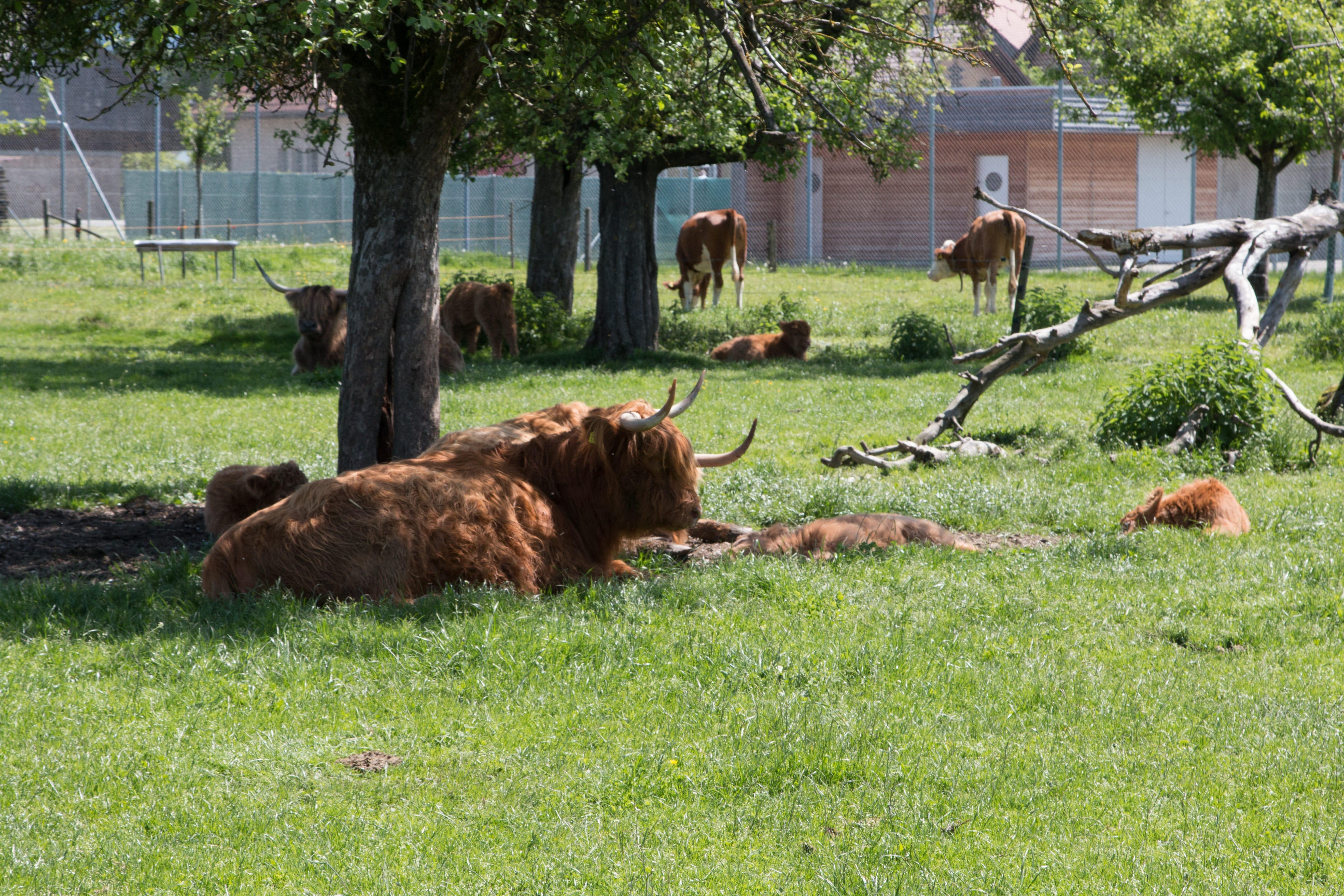 Die Tiere bei der Ruhepause: In der ganzjährigen Freilandhaltung auf der power-farm können soziale Beziehungen gepflegt und ausgelebt werden.