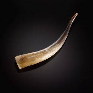 Hochlandrinder-Horn einzeln